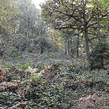 King's Wood, a Site of Special Scientific Interest and National Nature Reserve in Heath and Reach, B