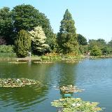Burnby Hall and Gardens, Pocklington, East Riding of Yorkshire, England. Lily ponds in Pocklington.