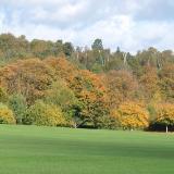 Addington Park Autumn colours approaching their best.