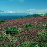 Coastel Area of the Exmoor National Park, Devon, GB