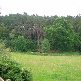 Silverwood Plantation, Kilmarnock, Ayrshire, Scotland.