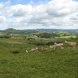 Shorn sheep on Dunsyre Hill Sheep grazing just below the top of Dunsyre Hill, on its northern side. This view looks over the West Water valley towards Mendick Hill.