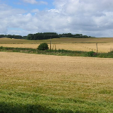 Arable land, Craigbrae. Most of the square is arable land. Ripening barley seen from the wooded embankment that carried the Ratho and Dalmeny Railway.