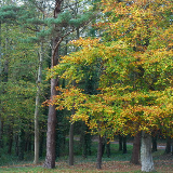 Parc Glynllifon Autumn colours in the woods for which the Park is famous.