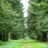 Big Wood, Thetford Forest. A group of walkers head along this forest walk leading away from Lynford Stag picnic site towards Lynford Hall. Thetford Forest is the largest lowland pine forest in Britain, started in the 1920s as a strategic timber reserve on the Breckland heaths which were of little agricultural value.