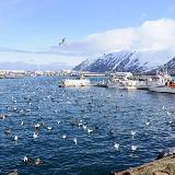 Iceland, Siglufjörður